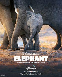 Elephant FRENCH WEBRIP 720p 2020